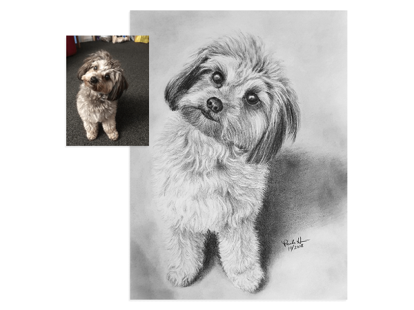 Puppy pencil portrait